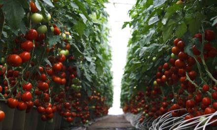 A zöldségtermesztés helyzetének értékelése (2018. január-április)