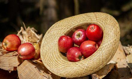 Az ipari alma különböző betakarítási formáinak üzemgazdasági értékelése