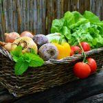 FruitVeB Bulletin – Zöldségtermesztés (2. rész)