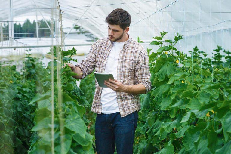Döntést segítő precíziós eszközök alkalmazása a zöldséghajtatásban