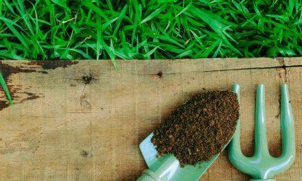 Új fejlesztésű közegek a balkonládás termesztéshez