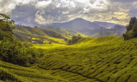 A hajtatott zöldségtermesztés trendjei, piaci viszonyai – 1. rész