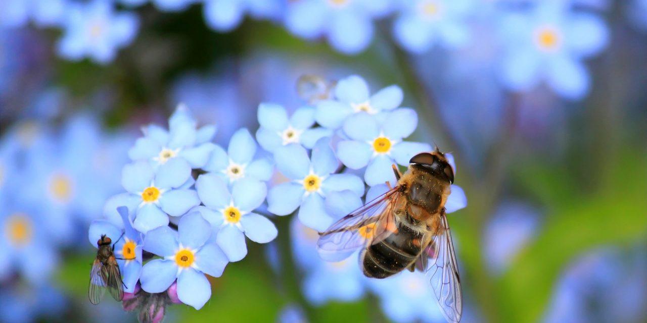 """""""Pro Biene"""" – avagy jól értelmezzük-e a méhek érdekeit?"""