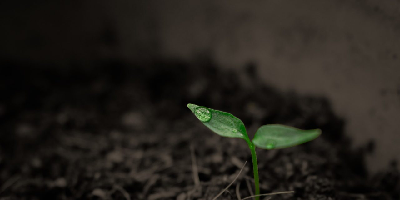 A zöldséghajtatás legújabb technológiai trendjei, fejlesztései